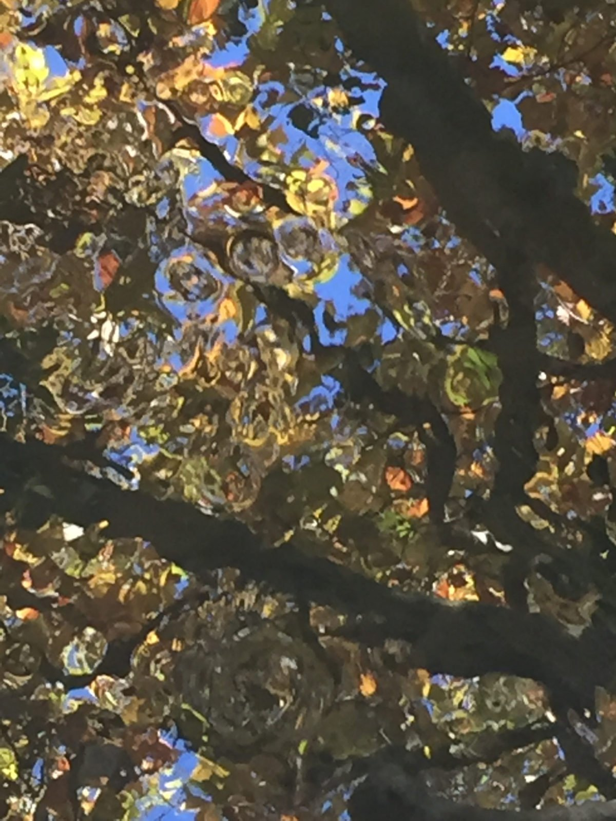 Photograph of reflected leaves, branches and the sky in a river in summertime